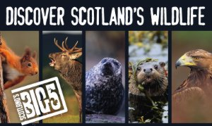 Scotland's Big 5 wild animals